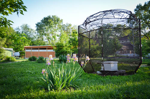 The bees are in the sculpture cage on the urban prairie