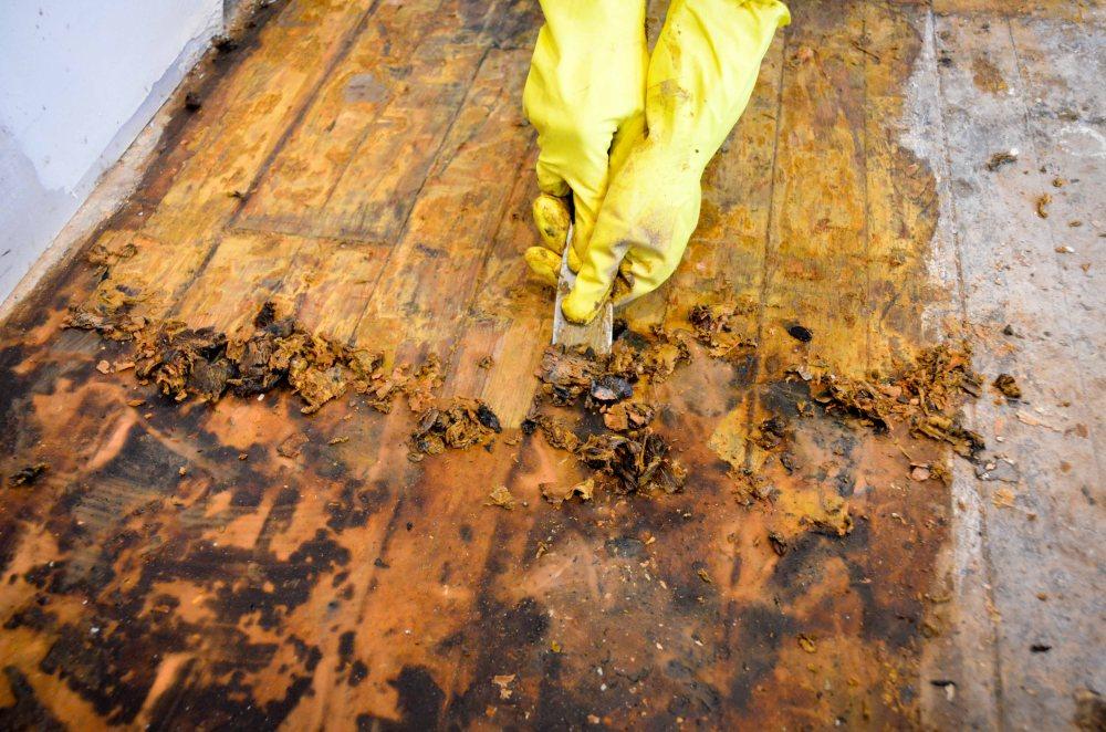 Mastic tar removal process
